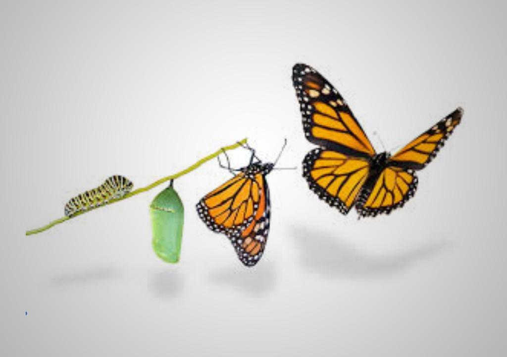 blog-butterfly.jpg